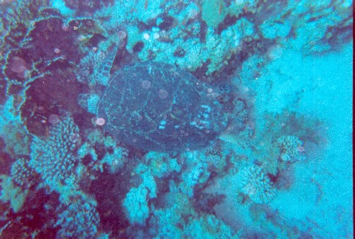turtle1vga.jpg